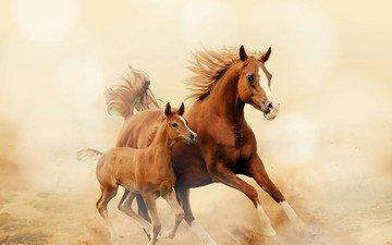 лошадь, лошади, кони, пыль, грива, бег, копыта, жеребенок