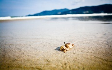 природа, берег, море, песок, пляж, горизонт, краб, клешни, краб на пляже