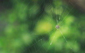 spider, web