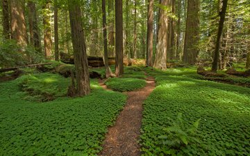 nature, forest, path