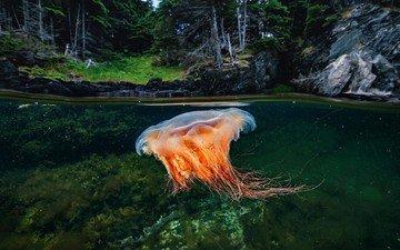 море, океан, медуза, подводный мир