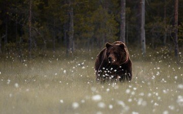 flowers, forest, bear, glade