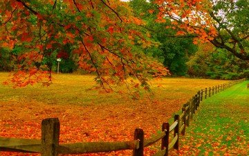 autumn, fence