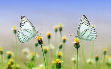 цветы, природа, макро, бабочки