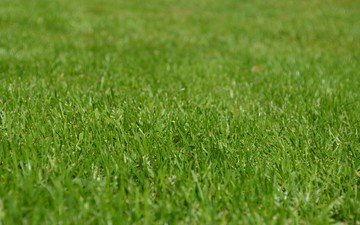 grass, lawn