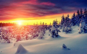 деревья, снег, закат, зима, сугробы