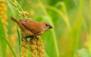 природа, растения, размытость, птица, клюв, воробей, перья