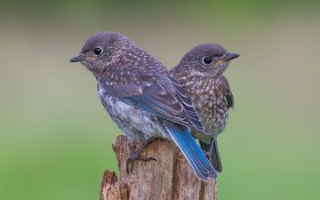 птицы, птички