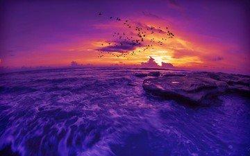 небо, облака, вечер, камни, закат, пейзаж, море, полет, горизонт, птицы, стая