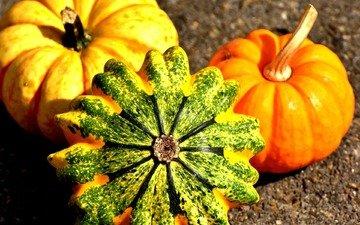 осень, урожай, тыквы, тыква