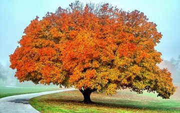tree, autumn
