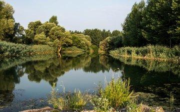 река, природа, лес, пейзаж, дунай