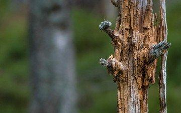 природа, дерево, ствол, мертвое дерево