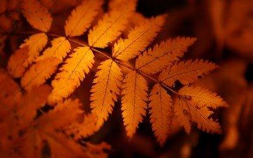 природа, дерево, листья, осень, лист, растение