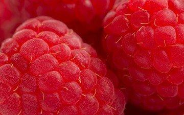 малина, ягода, красная
