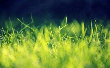 свет, трава, природа, фон