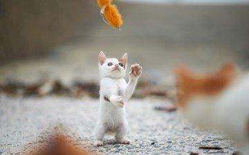 кот, мордочка, кошка, котенок, игра, лапки
