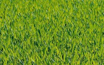трава, природа, фон
