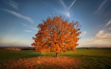 the sky, grass, clouds, the sun, tree, morning, field, horizon, autumn, meadow
