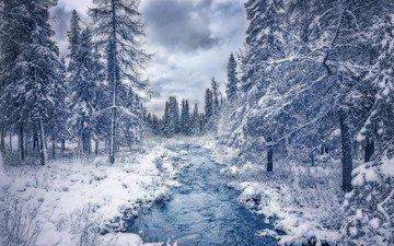 река, снег, дерево, лес, канада, квебек
