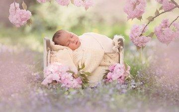 цветы, цветение, ветки, сон, сакура, малыш, младенец, спящий, кроватка