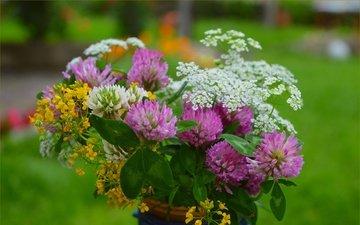 цветы, клевер, весна, букет, полевые цветы, тысячелистник