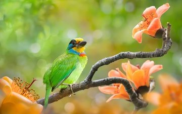 цветы, ветки, птица, тропики, боке