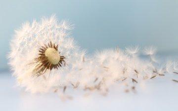 фон, одуванчик, семена, пух, пушинки, былинки