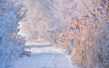 winter, jordache