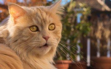 cat, look