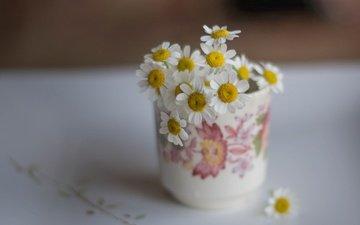 цветы, лепестки, кружка, ромашки, белые, букетик, боке