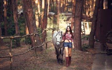 лошадь, деревья