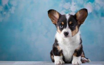 muzzle, puppy, cute