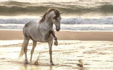 лошадь, море, песок, пляж, конь
