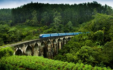 nature, bridge, train