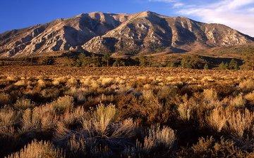 равнина, калифорния, сопка, кустарник