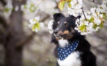 dog, spring
