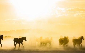 утро, кони