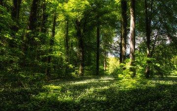 зелень, лес