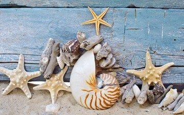 stars, shell