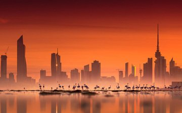 flamingo, the city, asia, birds, kuwait