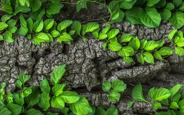 tree, leaves, macro, trunk, bark, liana