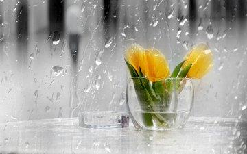 drops, rain, tulips, glass, vase
