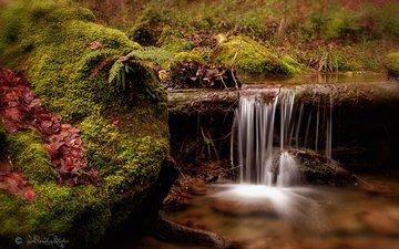 река, природа, водопад, мох, папоротник