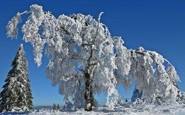 деревья, снег, природа, зима, иней