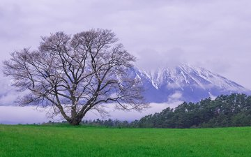 природа, дерево, пейзаж, гора, луг, весна