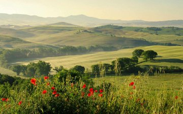 flowers, grass, hills, nature, landscape, field