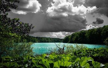 облака, деревья, вода, озеро, растения