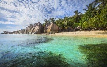 природа, море, пляж, пальмы, океан, тропики, сейшельские острова