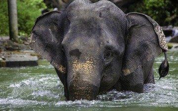 river, elephant, thailand
